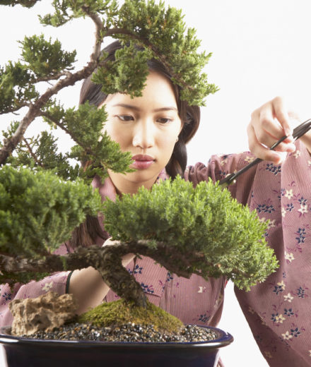 Woman trimming bonsai tree